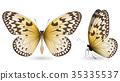 蝴蝶 一組 多彩 35335537
