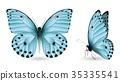 蝴蝶 一組 多彩 35335541