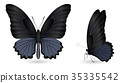 蝴蝶 蟲子 昆蟲 35335542