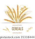 wheat cereals barley 35338444