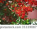 botanic, botanical, fruit 35339087
