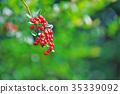 botanic, botanical, fruit 35339092