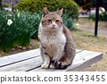 Staring cats 35343455