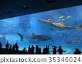 Okinawa Churaumi Aquarium 35346024