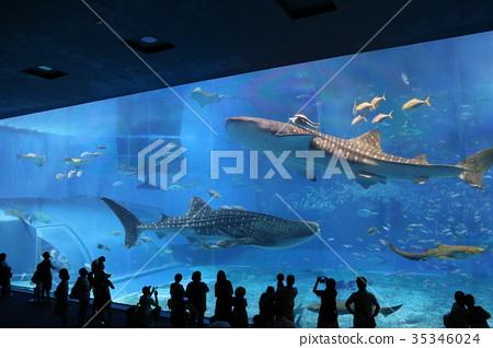 冲绳美丽海水族馆 35346024