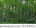 光叶榉 树 树木 35346451