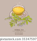 sage tea illustration 35347597