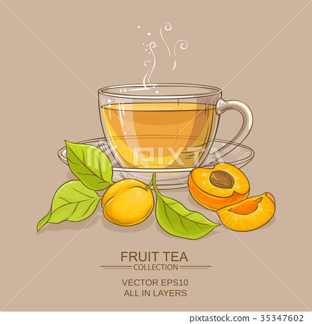 apricot tea illustration 35347602