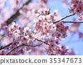 春天 春 櫻花 35347673