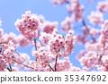 春天 春 櫻花 35347692