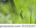 日本蚂蚱 虫子 漏洞 35350267
