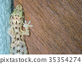 Lizard climbing the walls in the home. 35354274