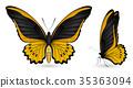 蝴蝶 一組 多彩 35363094