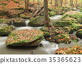 Brook in the autumn forest 35365623