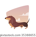 A vivid illustration of the dachshund. 35366655