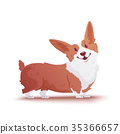 Happy dog Welsh Corgi. The style flat. 35366657