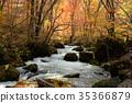 奥入濑溪流 阿修罗险滩 枫树 35366879