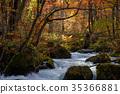 奥入濑溪流 阿修罗险滩 枫树 35366881