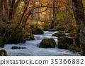 奥入濑溪流 阿修罗险滩 枫树 35366882