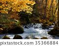 奥入濑溪流 阿修罗险滩 枫树 35366884