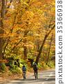 骑自行车 枫树 枫叶 35366938