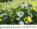 Bitterflower Bitter.Melon.Flowers 35367101