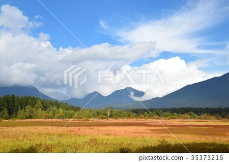 코타 다이 원의 잔디 단풍 35373216
