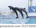 宽吻海豚并排跳跃 35373609