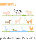 Set of farm animals - modern vector cartoon 35375814