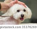 Dog grooming close up. 35376269