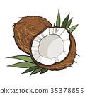 椰子 白色 摳圖 35378855