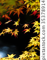 maple, yellow, leafe 35378914