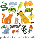 Pets Colorful Icons Set 35379846