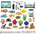 鱼 水族馆 水 35380375