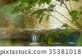foliage, leaf, leafs 35381018