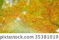 foliage, leaf, leafs 35381019
