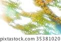 foliage, leaf, leafs 35381020