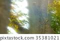 foliage, leaf, leafs 35381021