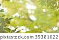 foliage, leaf, leafs 35381022