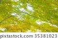 foliage, leaf, leafs 35381023