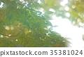 foliage, leaf, leafs 35381024