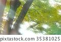 foliage, leaf, leafs 35381025