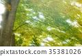 foliage, leaf, leafs 35381026