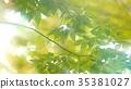 foliage, leaf, leafs 35381027