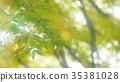 foliage, leaf, leafs 35381028