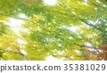 foliage, leaf, leafs 35381029