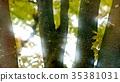 foliage, leaf, leafs 35381031