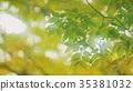 foliage, leaf, leafs 35381032