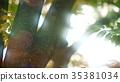 foliage, leaf, leafs 35381034