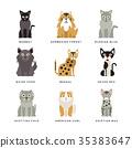 动物 猫 猫咪 35383647